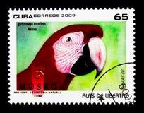 Ερυθρό Macaw (Ara Μακάο), παπαγάλοι serie, circa 2009 Στοκ Εικόνες