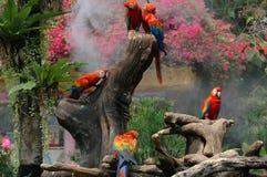 Ερυθρό Macaw (Ara Μακάο) Στοκ Εικόνες