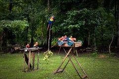 Ερυθρό Macaws που τρώει - Copan, Ονδούρα Στοκ εικόνες με δικαίωμα ελεύθερης χρήσης