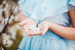 ερχόμενη άνοιξη Τα θηλυκά χέρια με τα άσπρα λουλούδια κλείνουν επάνω Στοκ φωτογραφία με δικαίωμα ελεύθερης χρήσης
