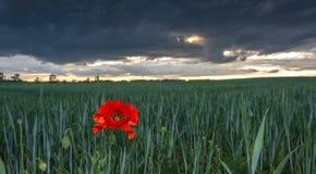 Ερχόμενη θύελλα πέρα από τους τομείς και τα λιβάδια Στοκ φωτογραφία με δικαίωμα ελεύθερης χρήσης