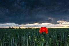 Ερχόμενη θύελλα πέρα από τους τομείς και τα λιβάδια Στοκ εικόνες με δικαίωμα ελεύθερης χρήσης