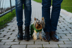Ερωτευμένο ζεύγος ποδιών και το μικρό σκυλί τους Στοκ εικόνες με δικαίωμα ελεύθερης χρήσης
