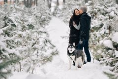 Ερωτευμένο και σιβηρικό γεροδεμένο σκυλί ζεύγους που περπατά στο χιονώδες χειμερινό δάσος στοκ εικόνες