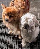 Ερωτεύσιμα σκυλιά στοκ φωτογραφίες με δικαίωμα ελεύθερης χρήσης