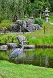Ερωδιός στο ιαπωνικό πάρκο Λονδίνο της Ολλανδίας κήπων Στοκ Εικόνες