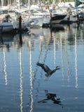 Ερωδιός Στοκ Φωτογραφίες