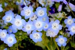 Εσείς και εγώ μπλε μάνικα Στοκ Φωτογραφία