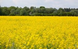 Εσθονικό αγροτικό τοπίο Στοκ φωτογραφίες με δικαίωμα ελεύθερης χρήσης
