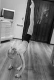 δεσμευμένη γυμναστική κοριτσιών Στοκ Εικόνες
