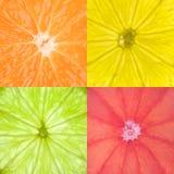 εσπεριδοειδή Στοκ εικόνες με δικαίωμα ελεύθερης χρήσης