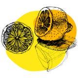εσπεριδοειδή που σκια Στοκ φωτογραφία με δικαίωμα ελεύθερης χρήσης