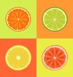 Εσπεριδοειδή στα διαφορετικά υπόβαθρα χρωμάτων ελεύθερη απεικόνιση δικαιώματος