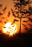 Εσπευσμένες σκιαγραφίες στο ηλιοβασίλεμα στοκ εικόνες