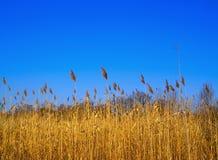 εσπευσμένος ουρανός Στοκ φωτογραφία με δικαίωμα ελεύθερης χρήσης
