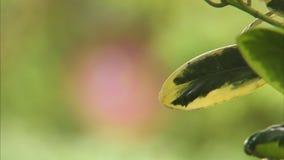 Εστίαση σε ένα φύλλο ενός φυτού απόθεμα βίντεο