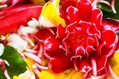 Εστίαση υποβάθρου λουλουδιών στην κόκκινη πιπερόριζα Στοκ Φωτογραφία