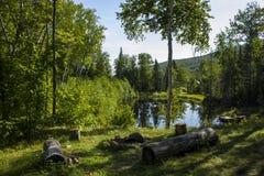 Εστία από μια ήρεμη λίμνη Στοκ Εικόνες