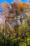 Εσωτερικά δάση του εθνικού πάρκου Djerdap ηλιόλουστο ημερησίως πτώσης Στοκ φωτογραφίες με δικαίωμα ελεύθερης χρήσης