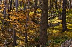 Εσωτερικά δάση του εθνικού πάρκου Djerdap στο βουνό Miroc ηλιόλουστο ημερησίως πτώσης Στοκ Εικόνες