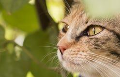 Εσωτερικά μάτια γατών Στοκ φωτογραφίες με δικαίωμα ελεύθερης χρήσης
