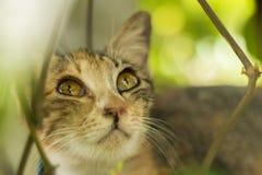 Εσωτερικά μάτια γατών Στοκ εικόνα με δικαίωμα ελεύθερης χρήσης