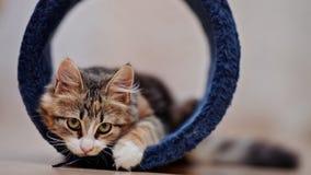 Εσωτερικά πολύχρωμα παιχνίδια γατακιών Στοκ Φωτογραφία
