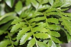 Εσωτερικά πράσινα φύλλα το χειμώνα στοκ εικόνες με δικαίωμα ελεύθερης χρήσης