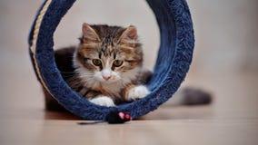 Εσωτερικά συμπαθητικά πολύχρωμα παιχνίδια γατακιών Στοκ εικόνα με δικαίωμα ελεύθερης χρήσης
