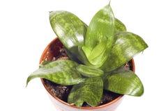 εσωτερικά φυτά στοκ φωτογραφία με δικαίωμα ελεύθερης χρήσης