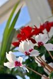 εσωτερικά φυτά Στοκ Εικόνες