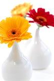 εσωτερικά vases σχεδίου Στοκ φωτογραφία με δικαίωμα ελεύθερης χρήσης