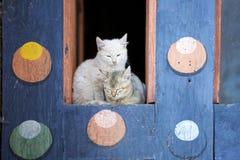 Εσωτερικές γάτες (catus felis) στο Kurjey Lhakhang, Μπουτάν Στοκ φωτογραφία με δικαίωμα ελεύθερης χρήσης