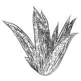 Εσωτερικές εγκαταστάσεις σπιτιών Συρμένος χέρι cactuse θάμνος φύλλων στο περιγραμματικό dood Στοκ Εικόνα