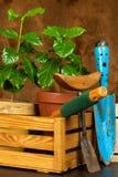 Εσωτερική ανάπτυξη καφέ γύρω από το φρέσκο κατάστημα φλυτζανιών καφέ φασολιών Δενδρύλλια του καφέ στον πίνακα αναπτύσσοντας φυτά Στοκ εικόνα με δικαίωμα ελεύθερης χρήσης