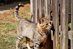 Εσωτερική γάτα από τον ξύλινο φράκτη στοκ φωτογραφία