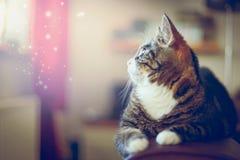 Εσωτερική γάτα που βρίσκεται στη πίσω θέση και που φαίνεται έξω παράθυρο Στοκ φωτογραφίες με δικαίωμα ελεύθερης χρήσης