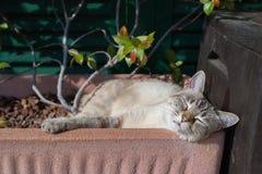 Εσωτερική γάτα που παίζει υπαίθρια στοκ φωτογραφίες με δικαίωμα ελεύθερης χρήσης