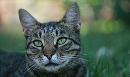 Εσωτερική γάτα στο πάρκο στοκ εικόνες