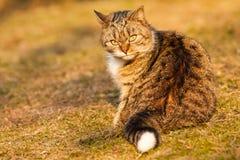 Εσωτερική γάτα Στοκ Εικόνες