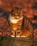 Εσωτερική γάτα στοκ εικόνα με δικαίωμα ελεύθερης χρήσης