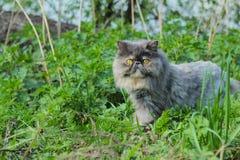 Εσωτερική γάτα Στοκ Φωτογραφία