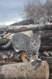 Εσωτερική γάτα 2 Στοκ εικόνα με δικαίωμα ελεύθερης χρήσης