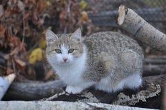 Εσωτερική γάτα 4 Στοκ Εικόνες