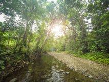 Εσωτερική ζούγκλα/στο δασικό τοπίο, τροπική φύση Στοκ Εικόνες