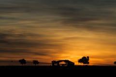 Εσωτερικός Αυστραλία ηλιοβασιλέματος Στοκ Φωτογραφία