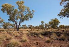 Εσωτερικός Αυστραλία στην ξηρασία Στοκ Εικόνες