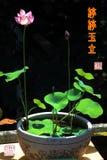 Εσωτερικός διακοσμήστε τη σε δοχείο κινεζική καλλιγραφία λωτού στοκ εικόνες