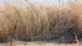 Εσωτερικός ξηρός τομέας χλόης απόθεμα βίντεο