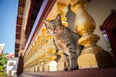 Εσωτερικός στενός χρυσός στυλοβάτης στάσεων γατών στο μοναστήρι Στοκ Εικόνες